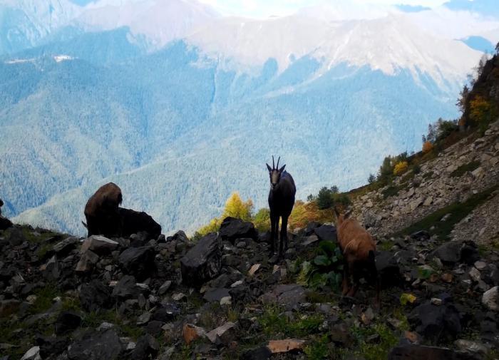 О диких животных позаботились в горах Сочи