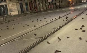 Жители Рима убили сотни птиц в новогоднюю ночь