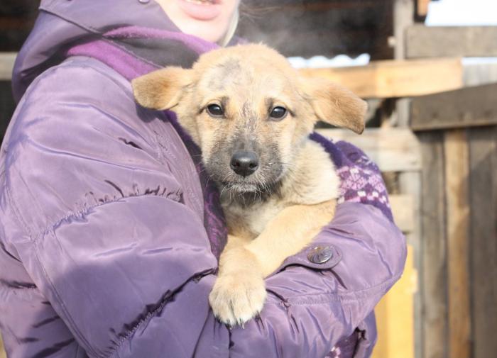 ВКонтакте запустила первое реалити-шоу о спасении животных