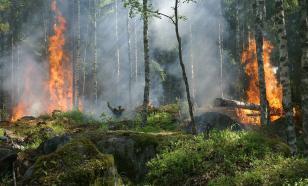 На выходных в Сибири потушены 38 лесных пожаров