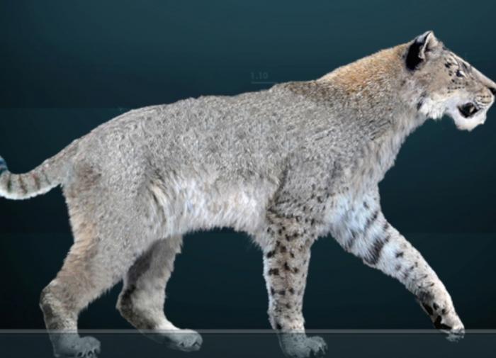 Обнаружены останки саблезубого кота весом около 400 кг