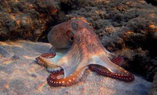 Превосходство осьминога над искусственным разумом