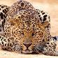За леопарда, напавшего на девочку в цирке, заступились врачи