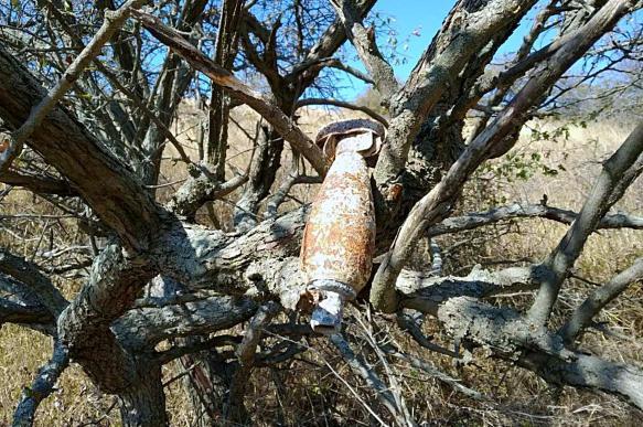 В Крыму на дереве нашли бомбу, которая висела там со времен ВОВ