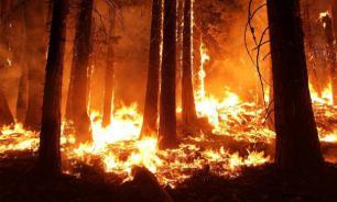 В Австралии во время лесных пожаров погибли более миллиарда животных