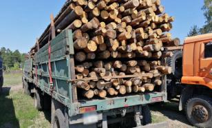 В Финляндии отреагировали на решение Путина запретить вывоз древесины