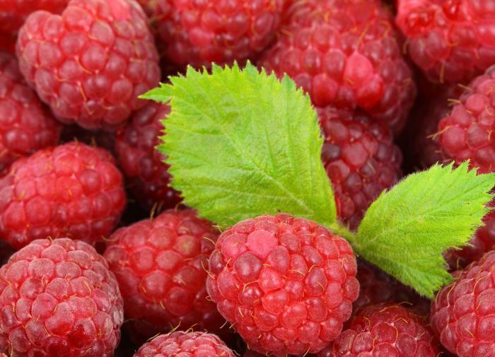 Малина выводит из организма токсины и снижает уровень сахара
