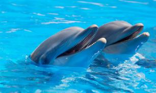 В Канкуне построят крупнейший в мире морской парк с дельфинами