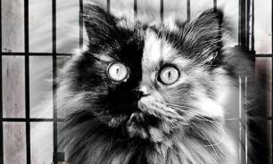 В Перми за долги хозяина арестовали кота. Сработало