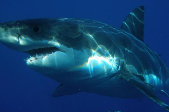 Повышение кислотности океана может лишить акул чешуи