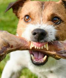 Почему рычит собака? Четыре основные причины