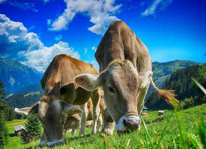 Россия приступит к вакцинации животных от коронавируса