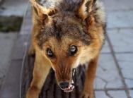 На Урале женщину растерзала стая бездомных собак