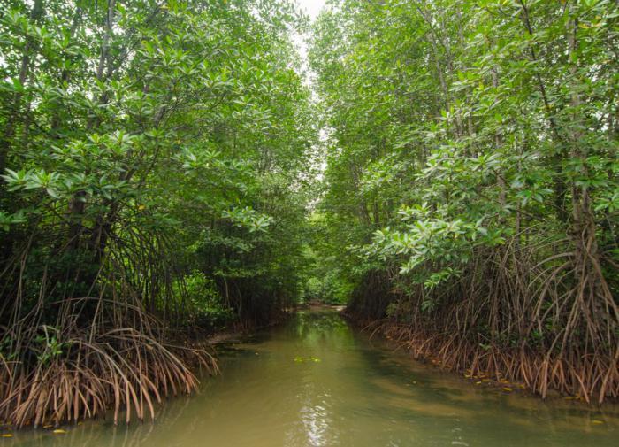 В мангровом лесу Вьетнама появится