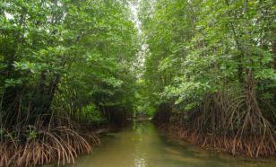 """В мангровом лесу Вьетнама появится """"туристический городок"""""""