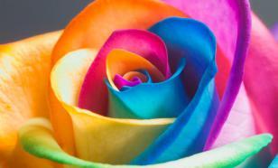 Цветолечение - практические рекомендации на каждый день