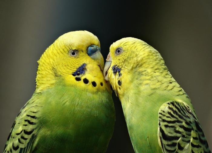 Житель Приморья с ножом похитил из магазина клетку с попугаями