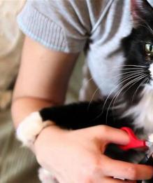 Нужно ли кошкам стричь когти?