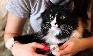 Нужно ли кошкам стричь когти