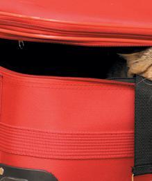 Переезд с кошкой: без паники!