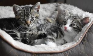 Исследователи выяснили, как определить настроение кошки
