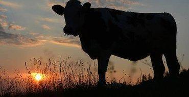 Чем чиновникам помешал домашний скот? – Прямой эфир Pravda.Ru