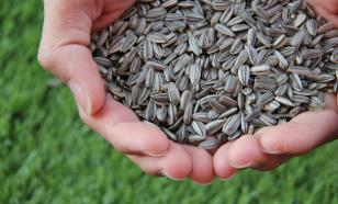 Диетолог рассказала о полезных и вредных свойствах семечек