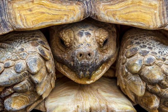 Черепаха в кожаном пальто