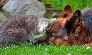 Дружат как кошка с собакой