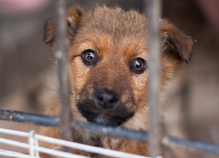 Зоозащитник Наталья Базаркина: 100 тысяч на помощь животным — ничто
