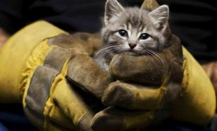 Пять историй о спасении котят
