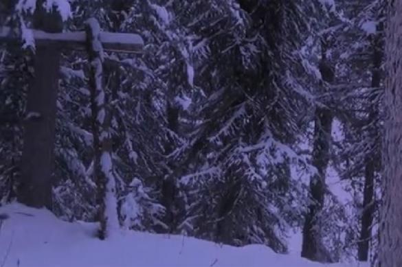 В Канаде видели снежного человека. Видео