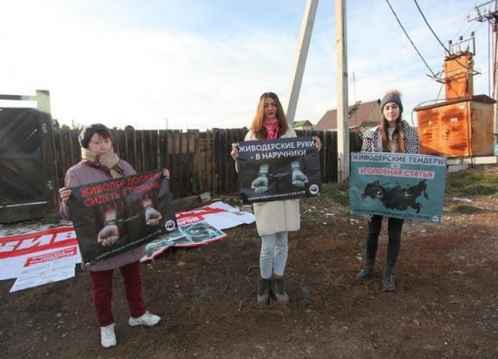 Приют для животных под Иркутском подозревают в убийстве 50 тысяч собак
