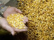 Сельское хозяйство чуть не погубило человечество