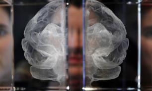 Ученые выяснили, как работает мозг голодного человека при виде пищи