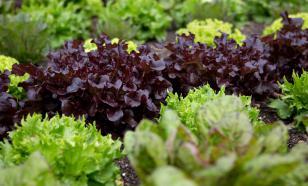 Листовая зелень: от каких болезней она нас защищает