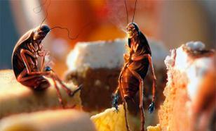 Стратегическая ловушка для... тараканов