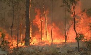 Сильные ветры мешают борьбе с пожарами в Австралии