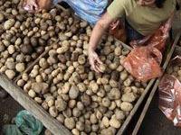 Биологи обещают повысить урожай картофеля.