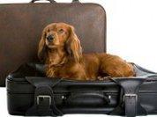 Отдых по-человечески для вашей... собаки
