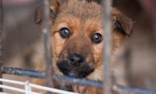Регионам могут позволить самим решать судьбу бездомных животных
