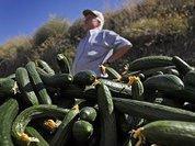 Украинский фермер на рынке ЕС: пан или пропал