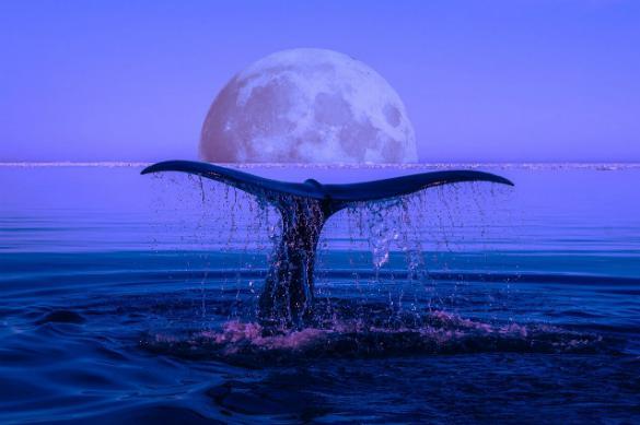 Бессмертные рогоносцы: дикие факты о китах