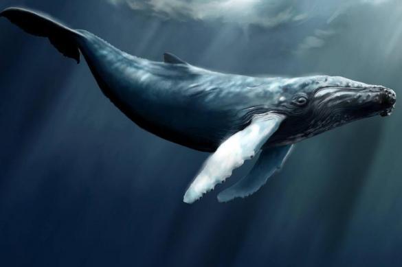 В Крыму впервые обнаружили останки китов