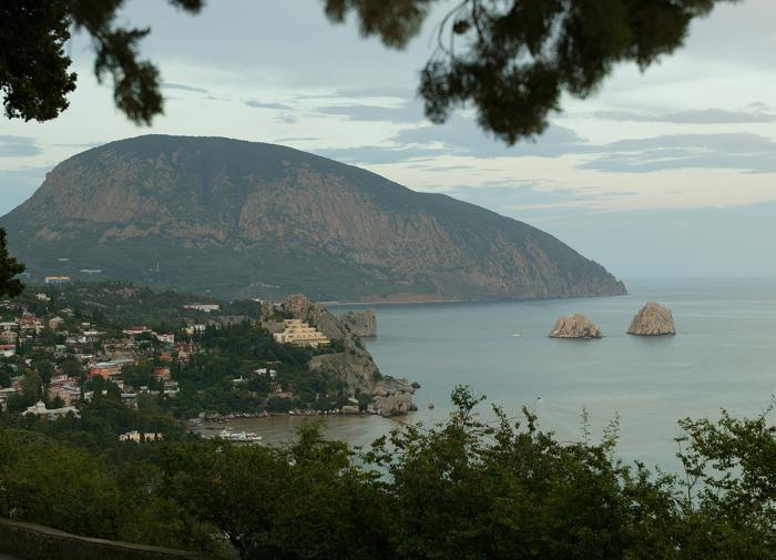В Крыму обнаружили новый сорт дерева с необычной окраской листьев