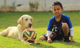 Собаки, которые болеют за своих хозяев - футбольных звезд