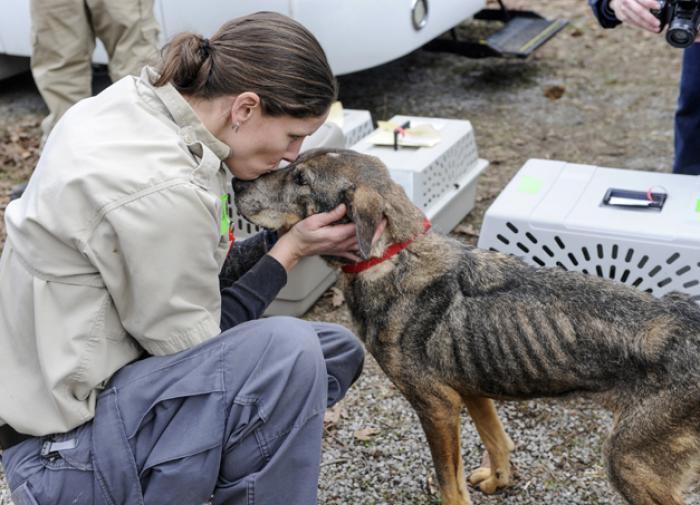Зоозащитник Наталья Базаркина: за жестокость к животным нужно сажать