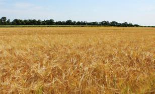 Самарская область не добрала 1 млн тонн зерна из-за неурожая