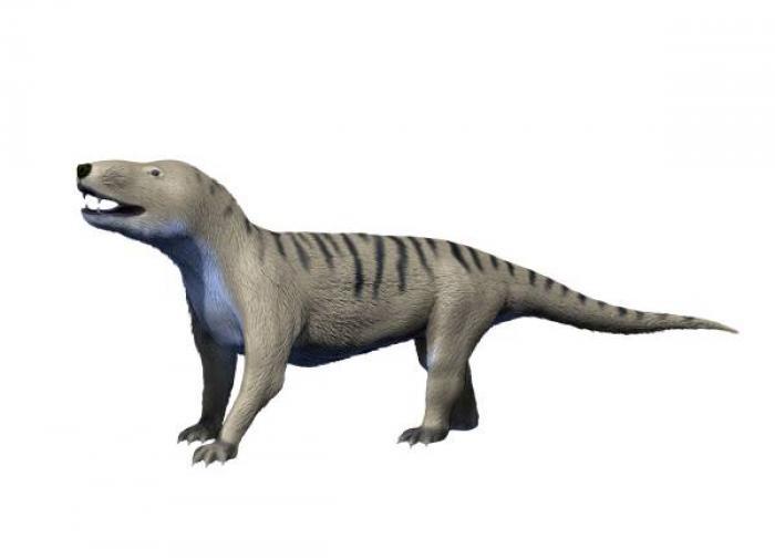 В Северной Америке обнаружили останки цинодонта возрастом 220 млн лет