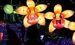 Орхидеи: советы по уходу в домашних условиях